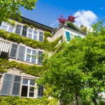 Fassade Reinigung: Kletterpflanzen