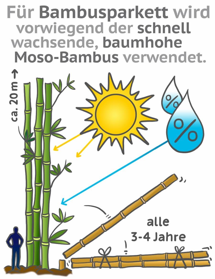 Für Bambus wird der schnell nachwachsende Moso-Bambus verwendet