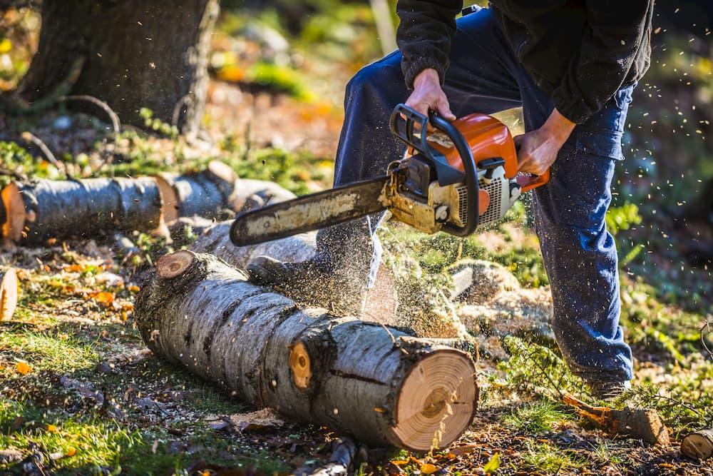 Ein Baum wird gefällt und zersägt © Photo Feats, stock.adobe.com