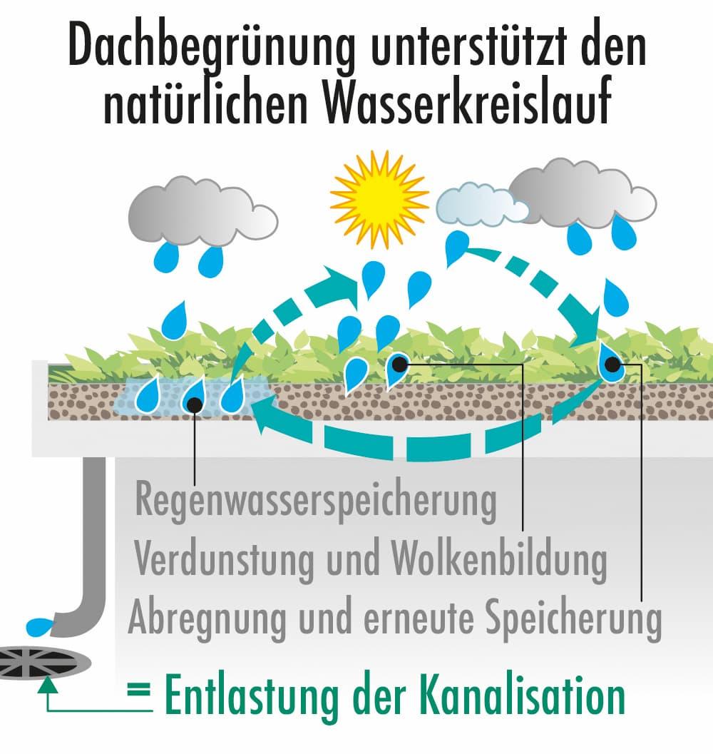 Dachbegrünung unterstützt den natürlichen Wasserkreislauf
