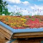 Welche Vorteile bietet eine Dachbegrünung?