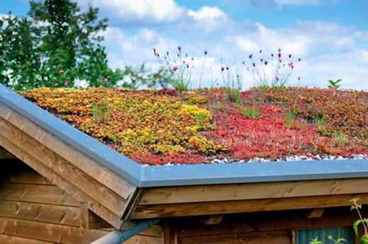 Extensive Dachbegrunung