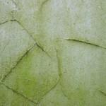 Fassaden-Reinigung: Schmutz und Mikroorganismen