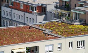 Dachbegrünung Überblick