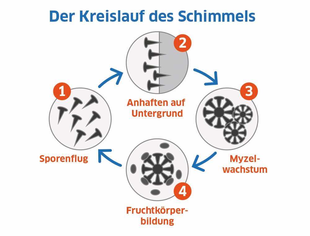 Der Kreislauf des Schimmels