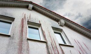 Algen, Pilze und Verschmutzungen von der Fassade entfernen