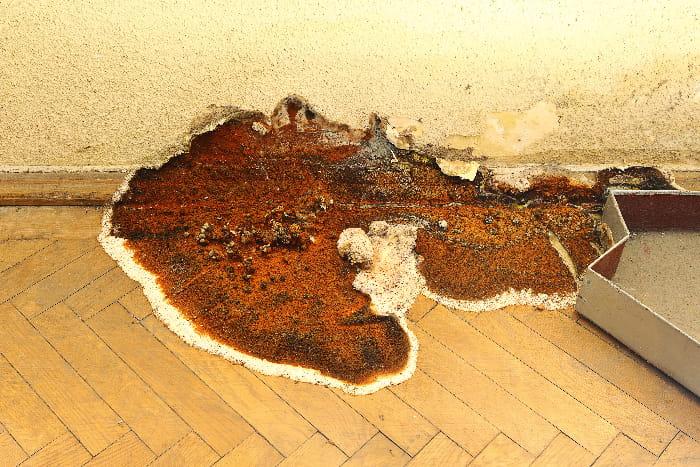 Hausschwamm auf Parkettboden © taviphoto, stock.adobe.com