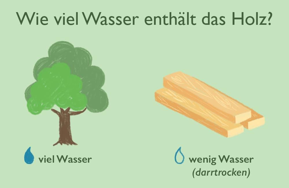 Wie viel Wasser enthält das Holz?
