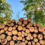 Rohdichte von Holz