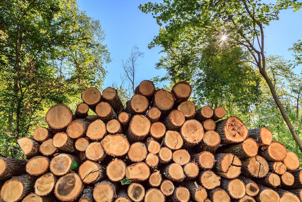 Holzstämme im Wald © Lilli, stock.adobe.com