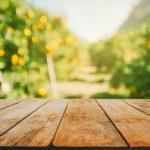 Quellen und Schwinden von Holz