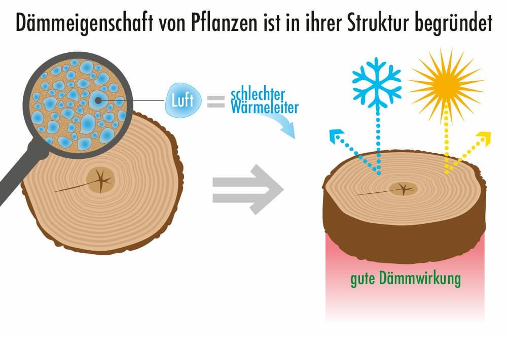 Dämmeigenschaften von Pflanzen sind in Ihrer Struktur begründet