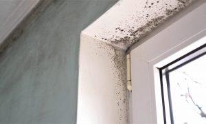 Schimmel an der Wand einfach übertapezieren?