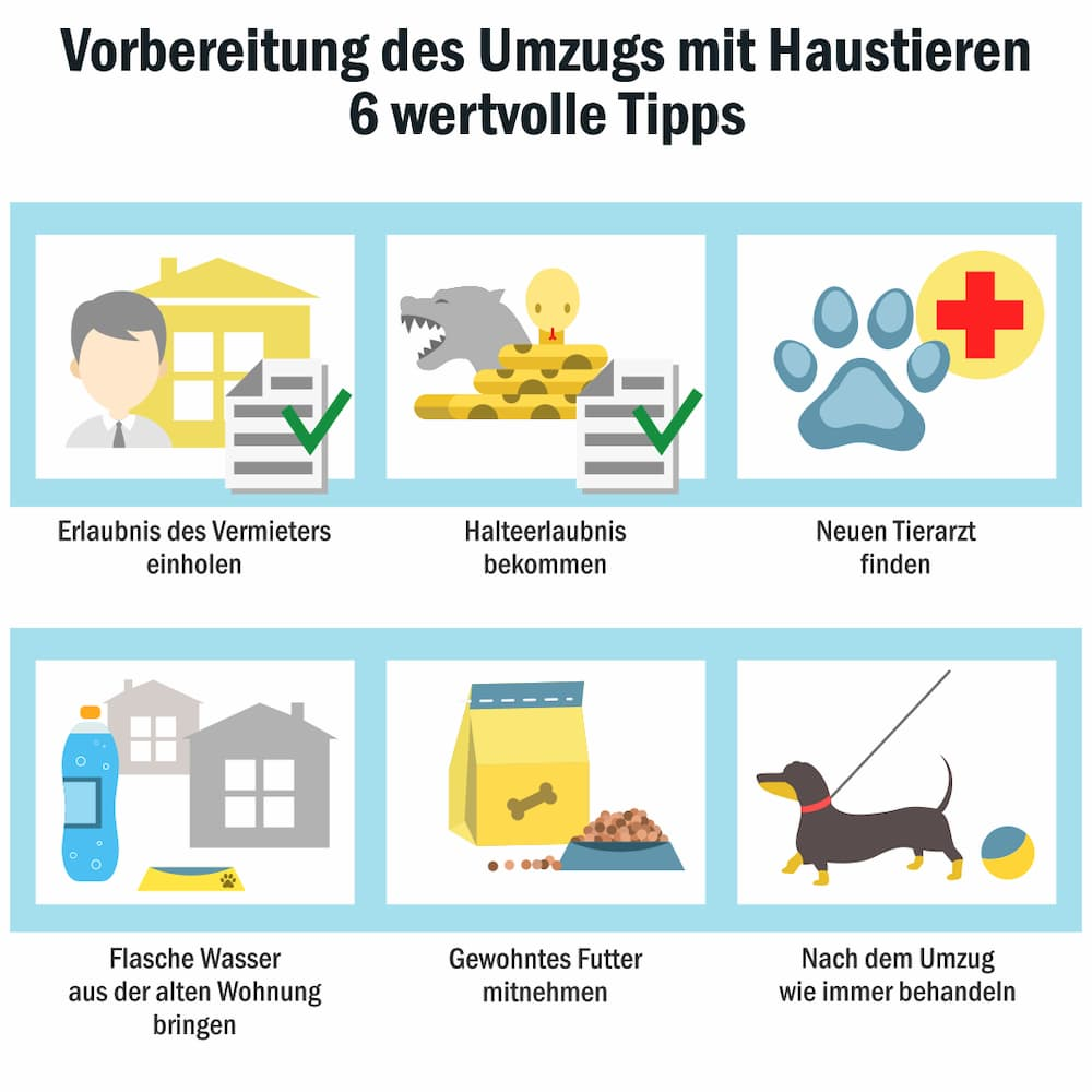 Umzug mit Haustieren: Sechs wertvolle Tipps