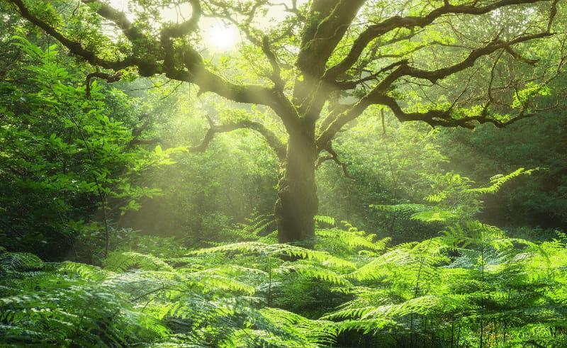 Naturbild © fotoschlick, stock.abobe.com
