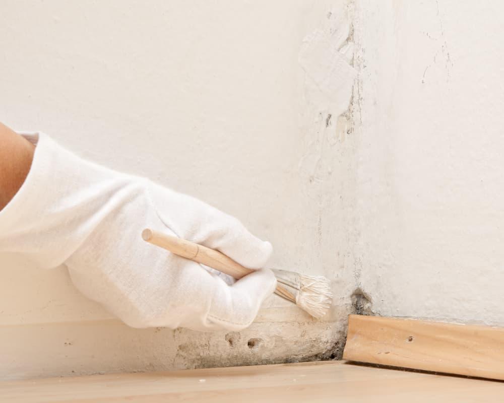 Wand streichen nach Schimmelbeseitigung © Zlatan Durakovic, stock.adobe.com